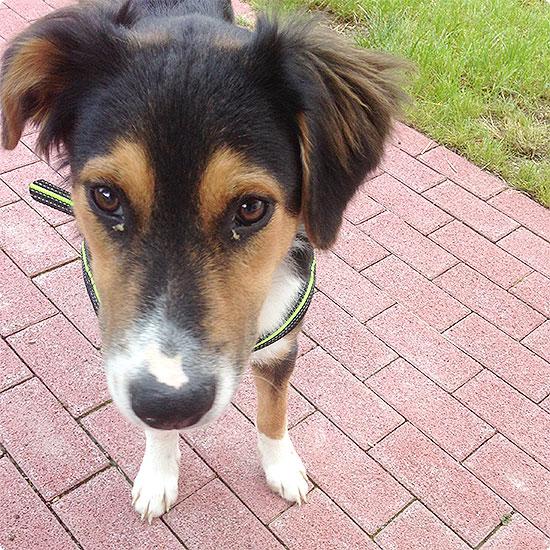 12 von 12 - Juli 2014 - müder Hund muss pinkeln