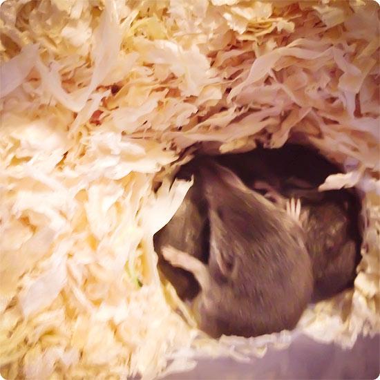 12 von 12 - März 2014 - Spitzmäuse - Babys