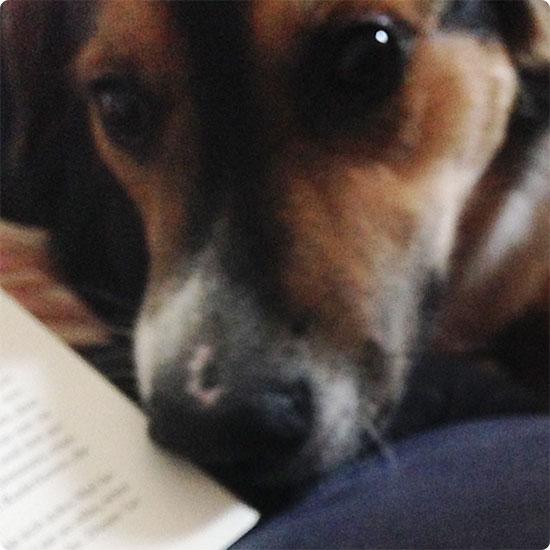 12 von 12 - November 2014 - Besuch vom Hund beim Lesen