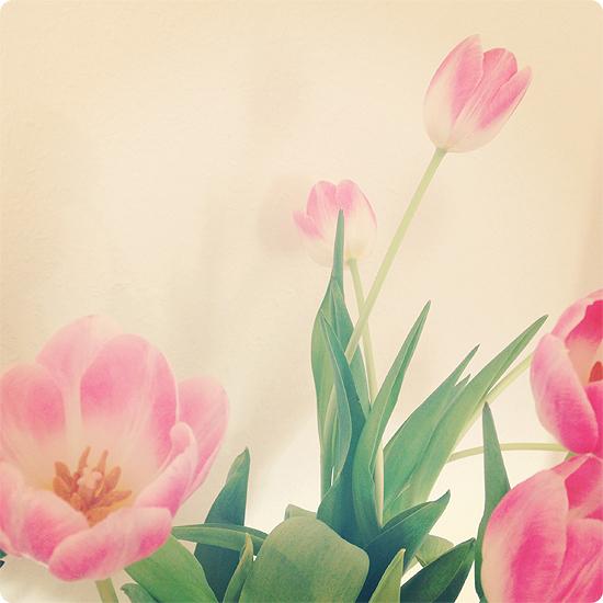 7 Tage - 7 Bilder   KW#10   Tulpen auf dem Esstisch