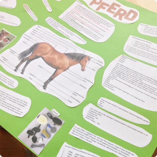 7 Tage - 7 Bilder   KW#16   Referat 4. Klasse über Pferde