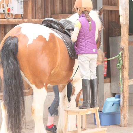 Reiten - Pferd putzen im Juni 2013