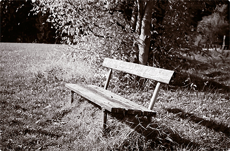 Waldspaziergang - Herbst 2013 - Wald - Bank