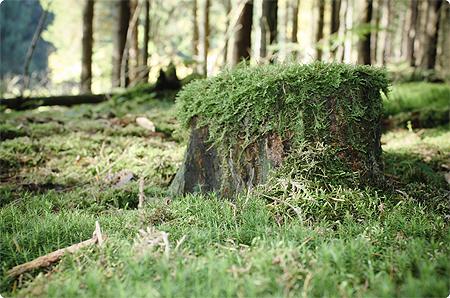 Waldspaziergang - Herbst 2013 - Wald - Moos - Baumstumpf