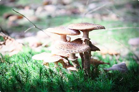 Waldspaziergang - Herbst 2013 - Wald - Pilze