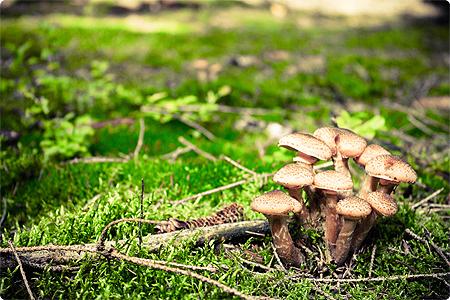Waldspaziergang - Herbst 2013 - Wald - Pilze - Pilzgruppe