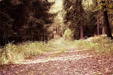 Waldspaziergang - Herbst 2013 - Wald - Weg