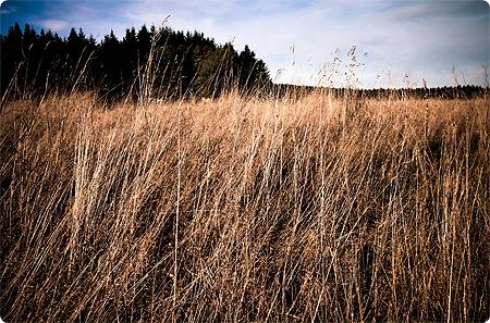 Waldspaziergang - Herbst 2013 - Wald - Feld - Waldrand