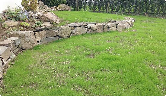 Ein Garten entsteht. #2 - der gesäte Rasen wächst und gedeiht