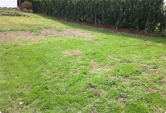 Ein Garten entsteht. #2 - begrünter Lehmboden
