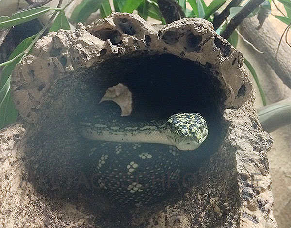 Kölner Zoo - Schlange