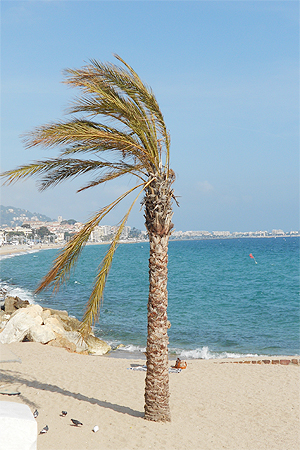 Cannes - Palme am Sandstrand