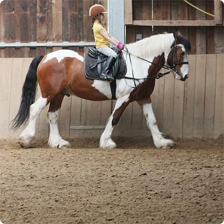 Rückblick Juni - reiten - Pferd