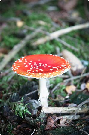 Waldspaziergang - Herbst 2013 - Wald - Pilz - Fliegenpilz - Pilze
