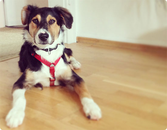 Hund aus dem Tierheim - gute Entscheidung. Cäsar