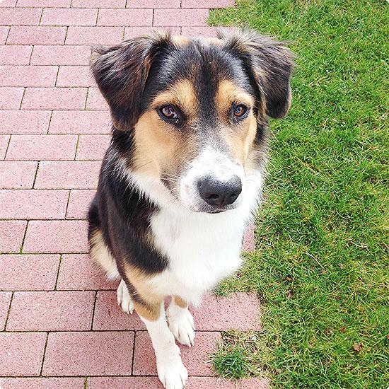 12 von 12 - September 2014 - mit dem Hund in den Garten