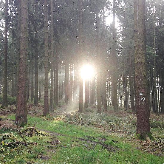 12 von 12 - November 2014 - Spaziergang durch den Wald