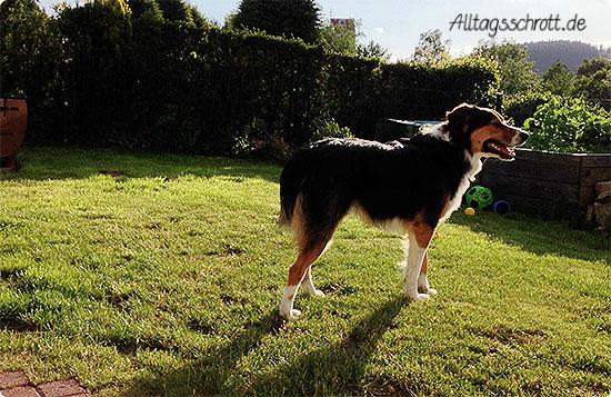 Wochenende in Bildern - Hund in der Sonne