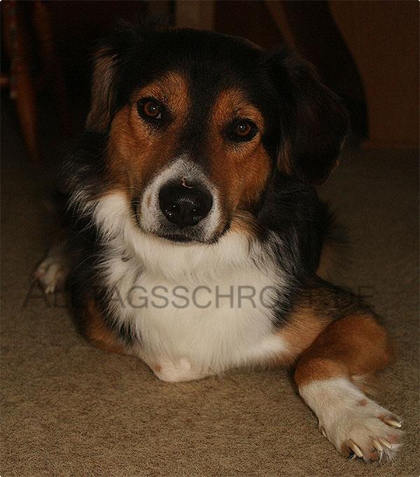 12 von 12 - August 2015 - Cäsar, der Heldenhund