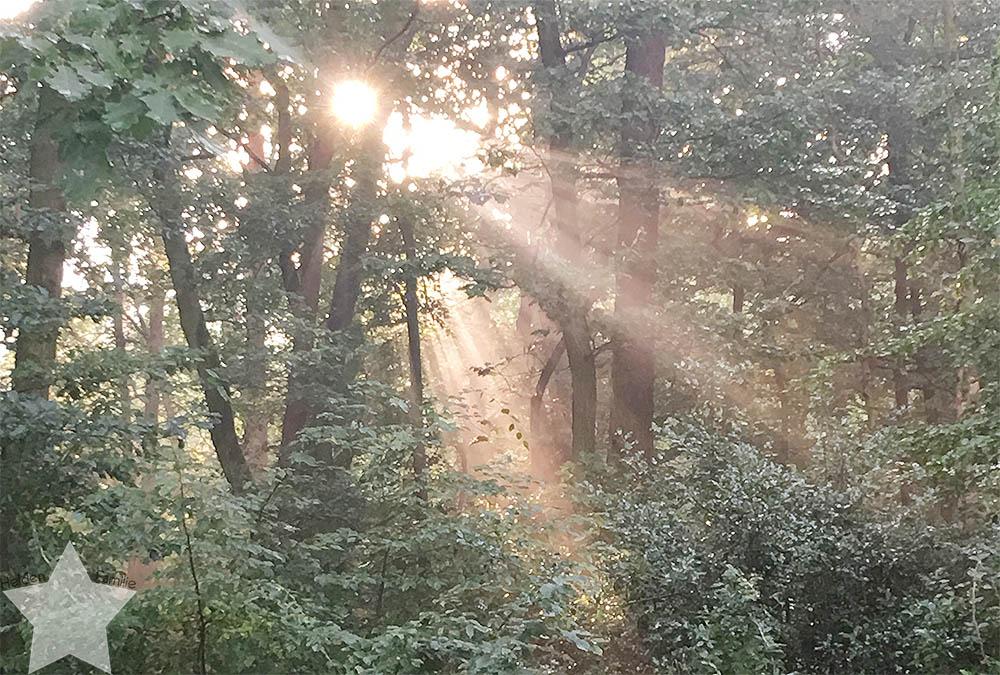 Wochenende in Bildern - pinke Hochzeit - Sonne im Wald