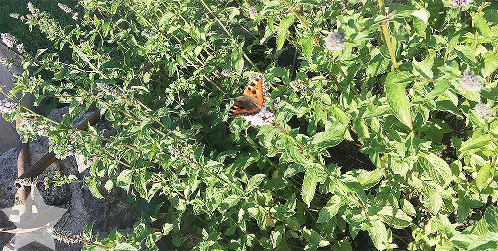 Wochenende in Bildern - 12. Geburtstag - Schmetterling