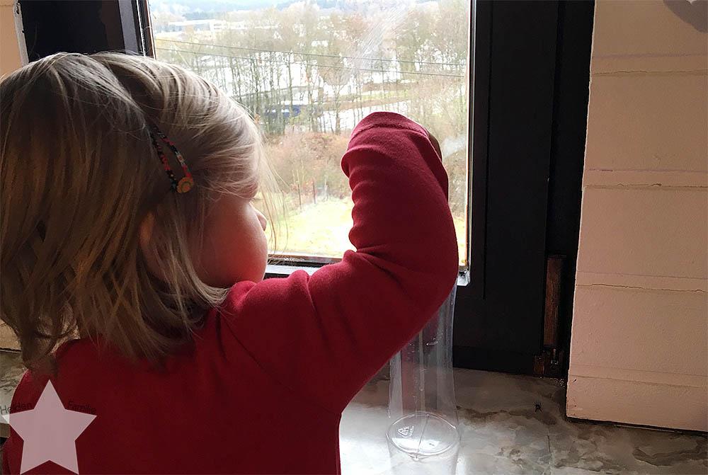 Wochenende in Bildern - Planänderungen - Lotte guckt aus dem Fenster