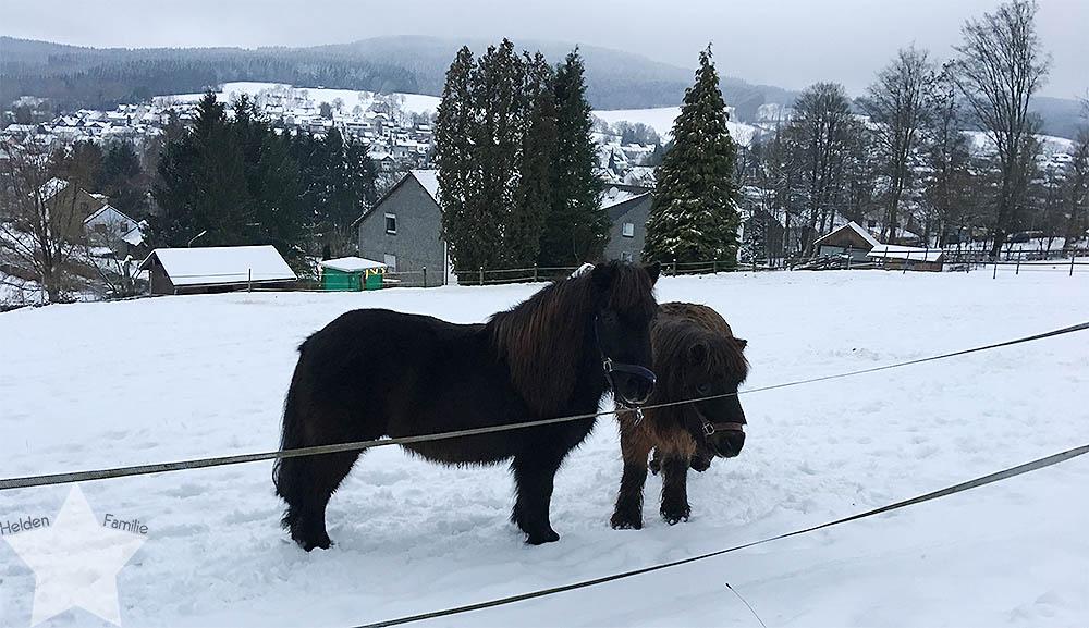 Wochenende in Bildern - Nähprojekte & Schneegestöber - Ponys im Schnee