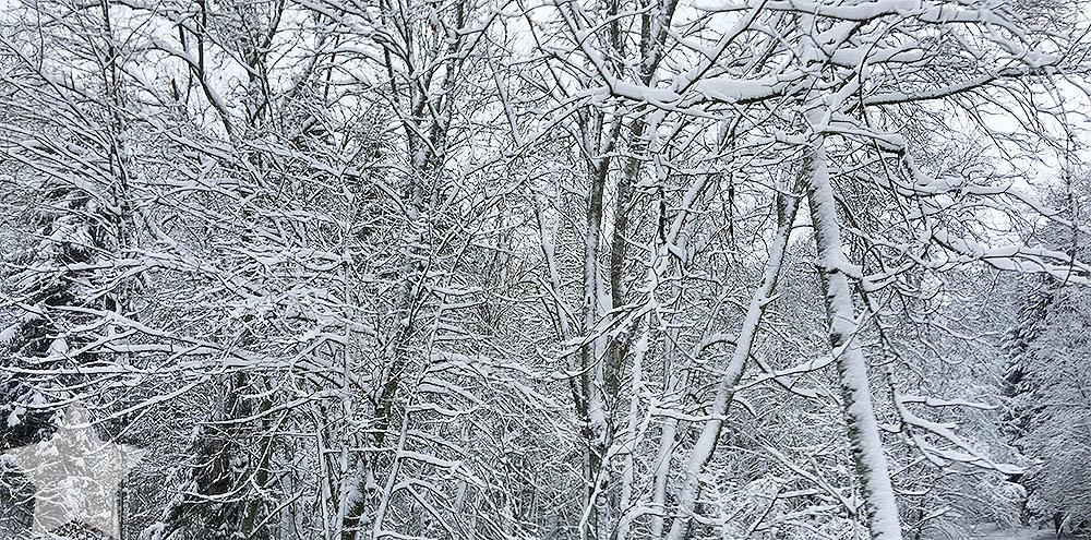 Wochenende in Bildern - Startschuss - Winterlandschaft