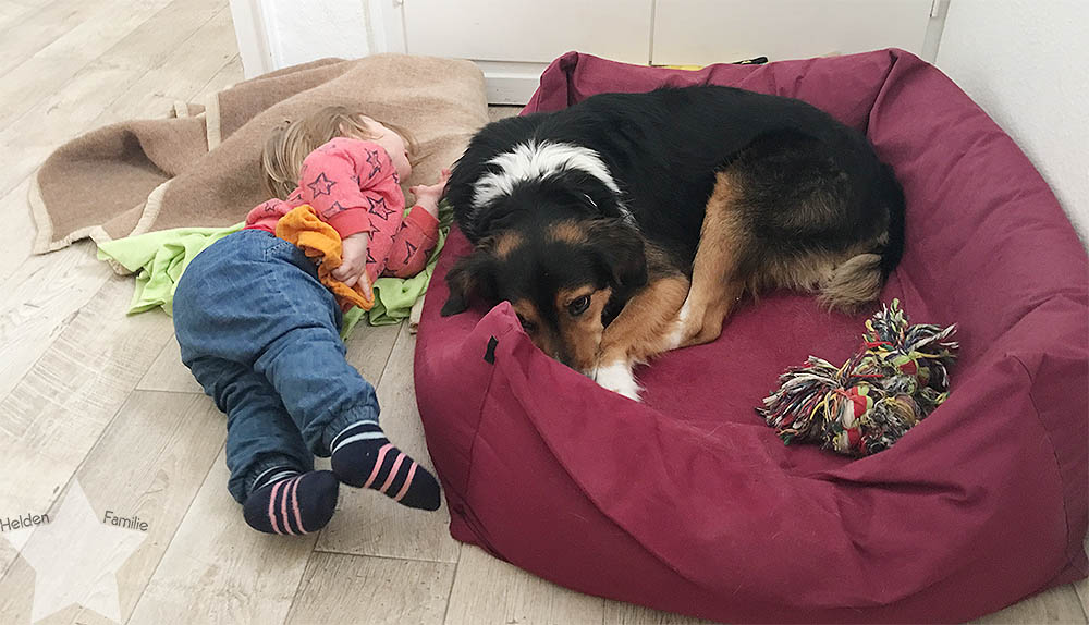 Wochenende in Bildern - Startschuss - Kleinkind und Hund