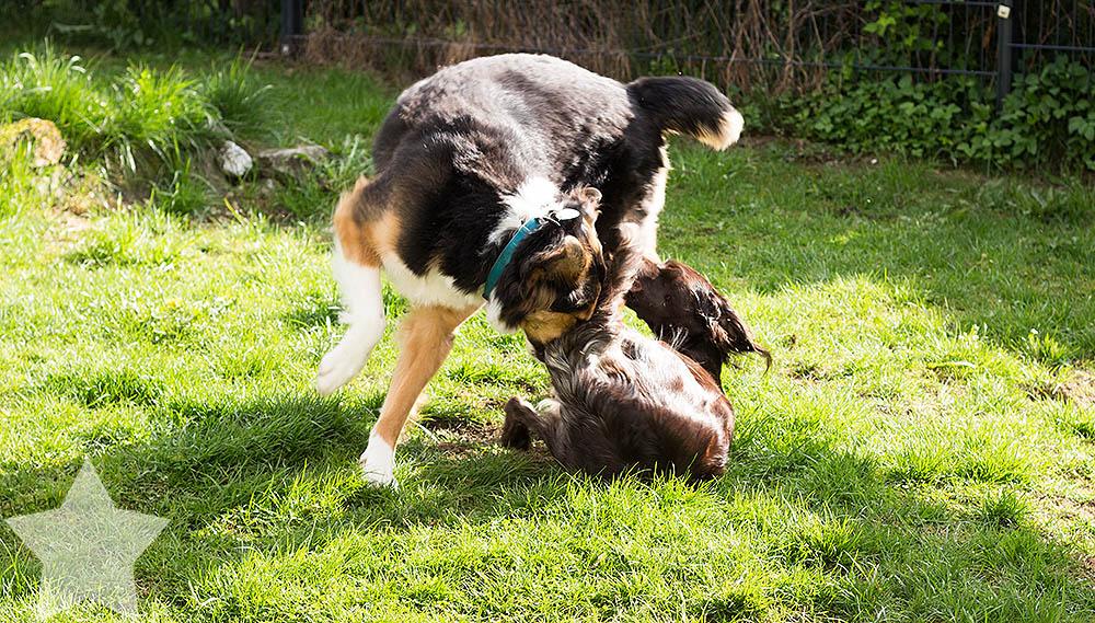 Wochenende in Bildern - tobende Hunde