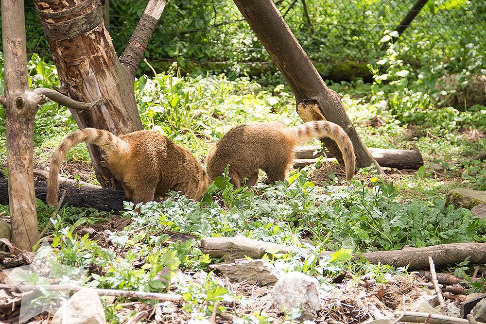 Wochenende in Bildern - ♥-Freunde Wiedersehen und Ausflug zum Affen- und Vogelpark - Nasenbären