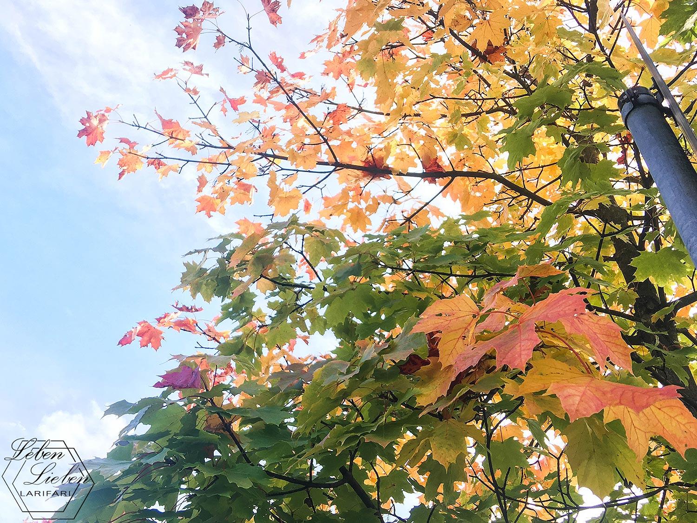 #WIB - bunter Herbst