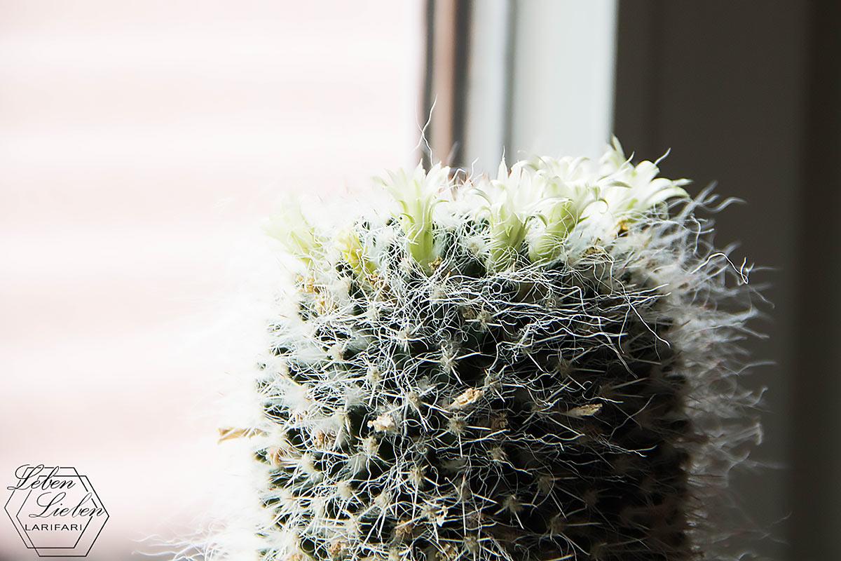 die 1. Pflanze in der gemeinsamen Wohnung: ein Kaktus