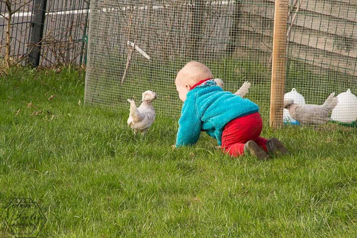 Jona bei den Hühnern