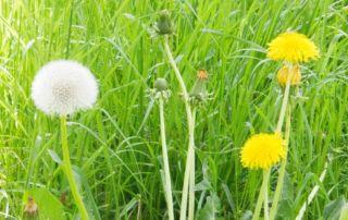 12von12 im Mai - Arbeit, Garten & ... Frühling!