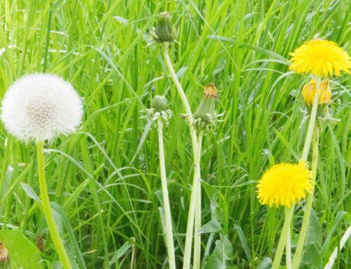 Arbeit, Garten & … Frühling! | 12von12 im Mai