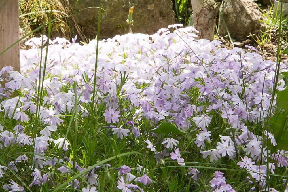 Frühling, überall blüht es im Garten