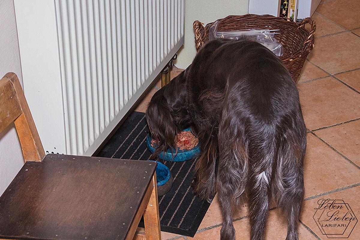 Hund versorgen und mitnehmen