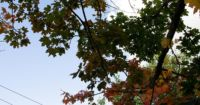 Rumhängen, Kinderbespaßung und Arbeiten   12von12 im September