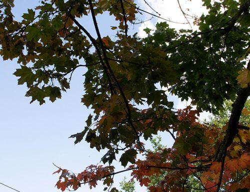 Rumhängen, Kinderbespaßung und Arbeiten |  12von12 im September