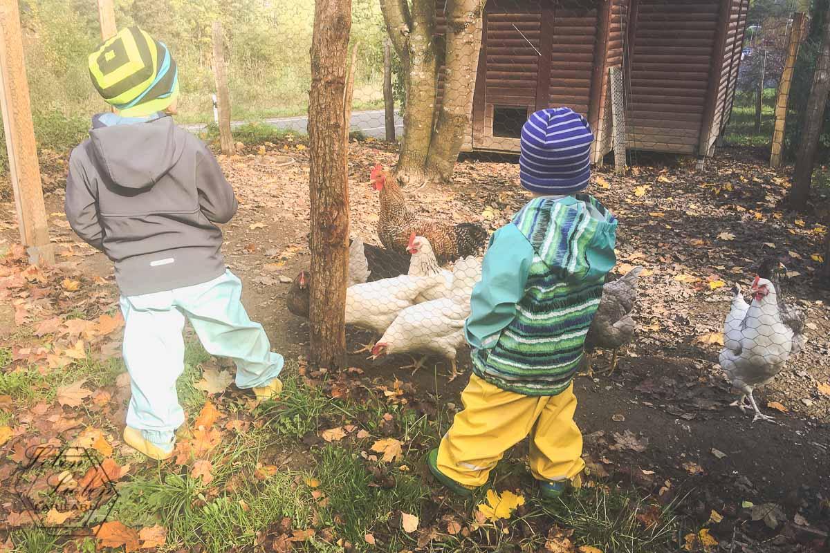 Die Hühner freuen sich