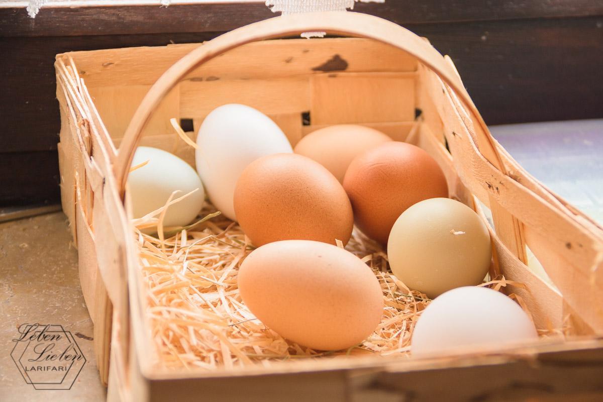 Eier aus eigener Hühnerhaltung