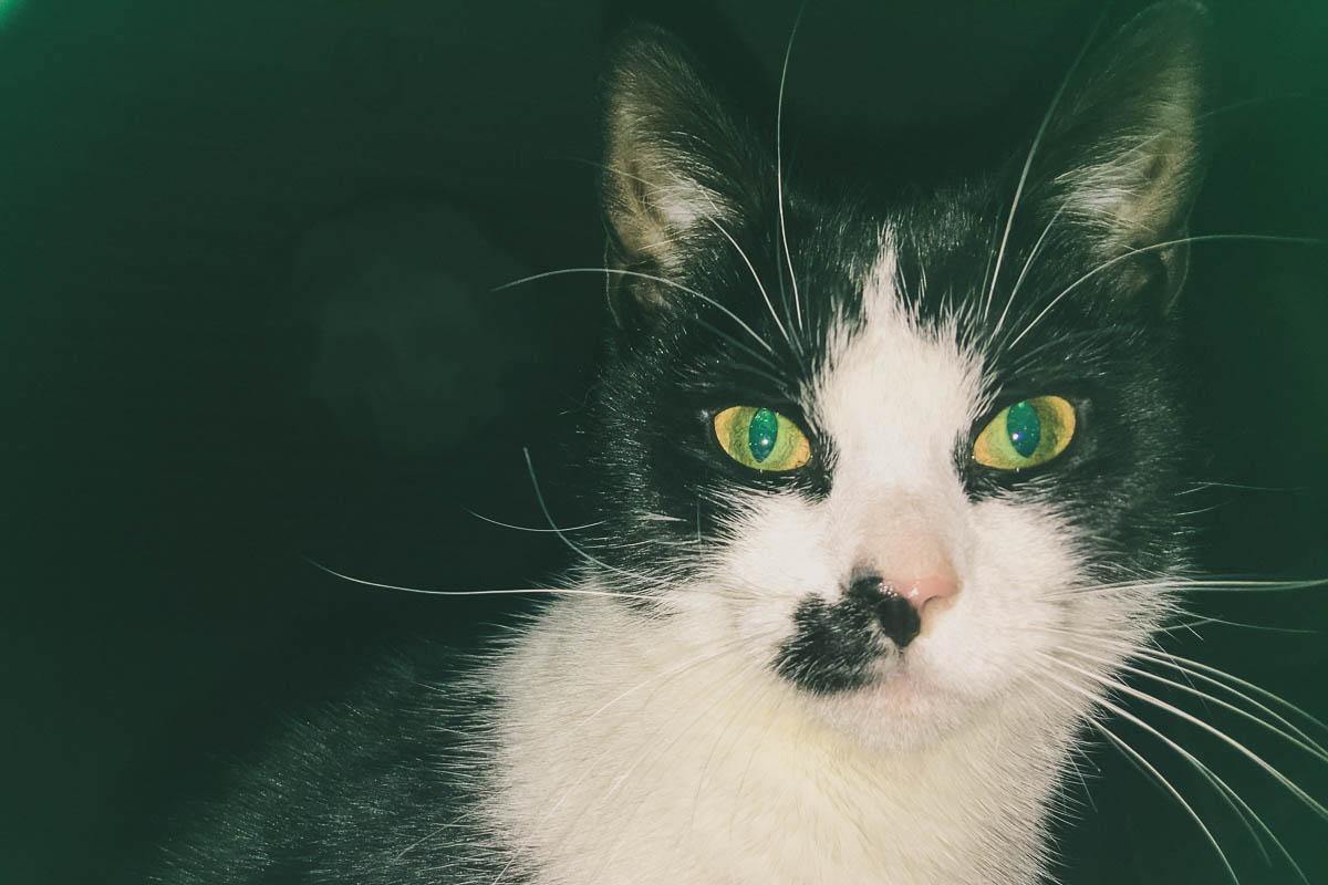 schwarz-weiße Katze mit grünen Augen